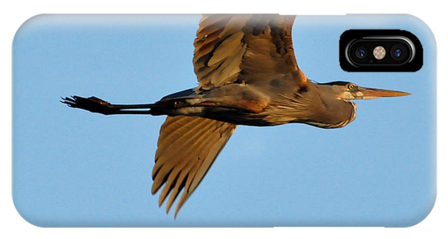 Great Blue Heron IPhone X Case featuring the photograph Heron 250a by David McDowell