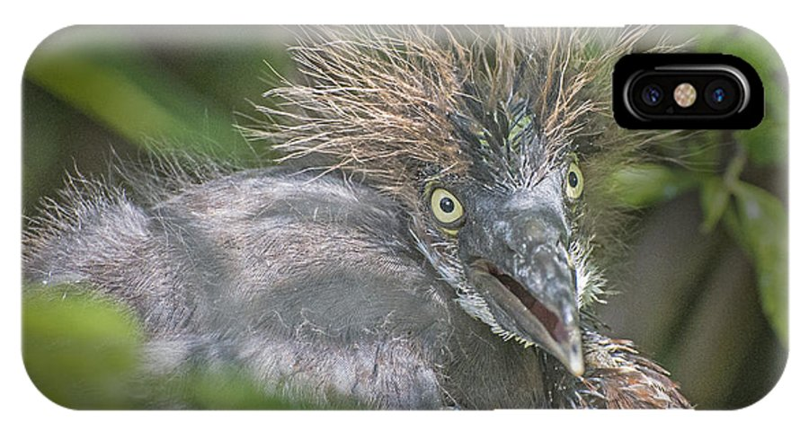 Heron IPhone X Case featuring the photograph Heron Chick by Jim Rettker