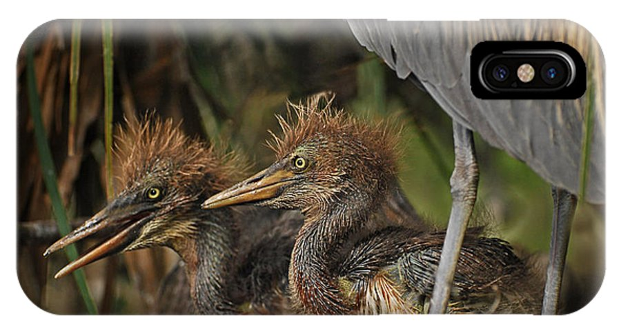 Birds IPhone X Case featuring the photograph Heron Chicks by Jim Rettker