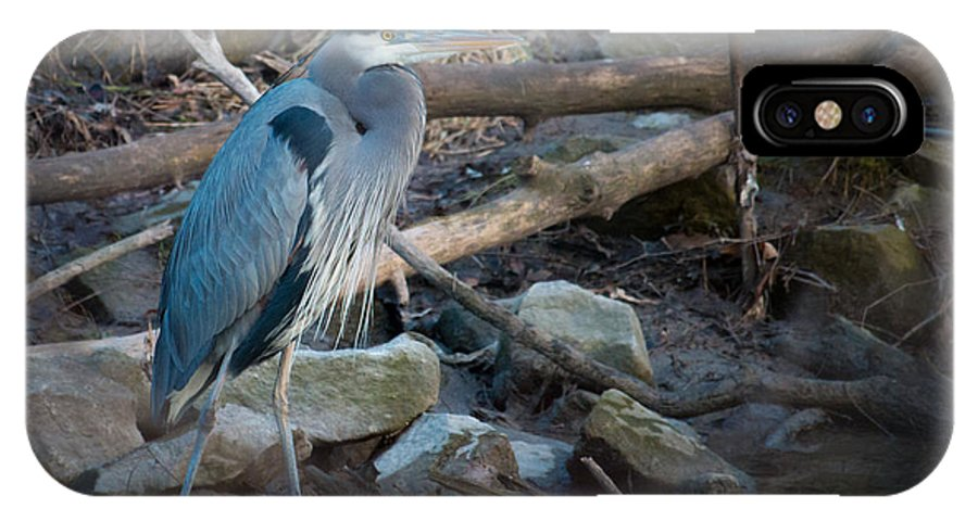 Blue Heron IPhone X Case featuring the photograph Heron King by Sascha Duentsch