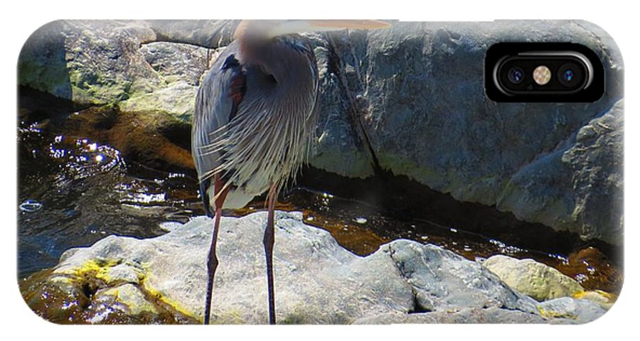 Nature IPhone X Case featuring the photograph Heron On The Rocks by Rrrose Pix