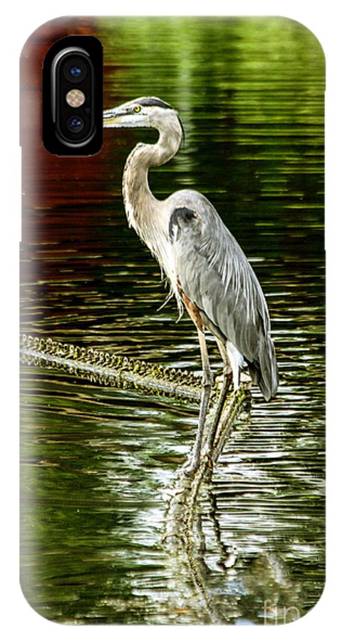 Kc Zoo IPhone X Case featuring the photograph Heron On The Stick by Terri Morris