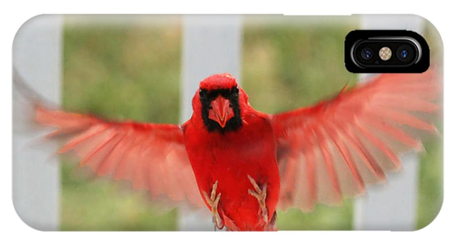 Cardinal IPhone X Case featuring the photograph He's Safe by John Flannery
