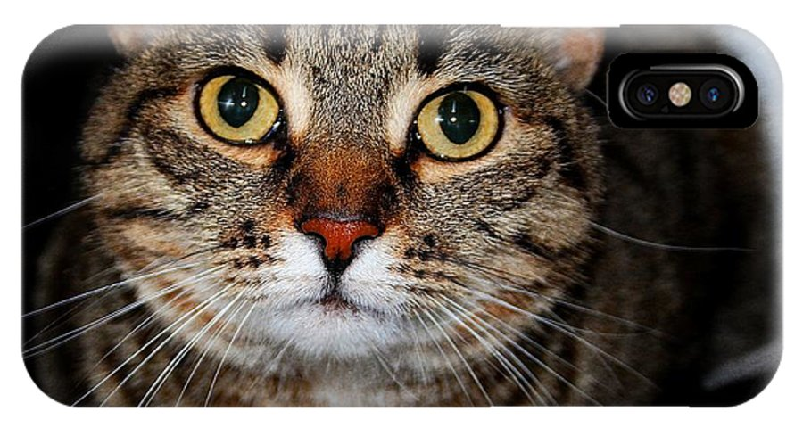 Brown Tabby IPhone X Case featuring the photograph Hi by Joyce Baldassarre