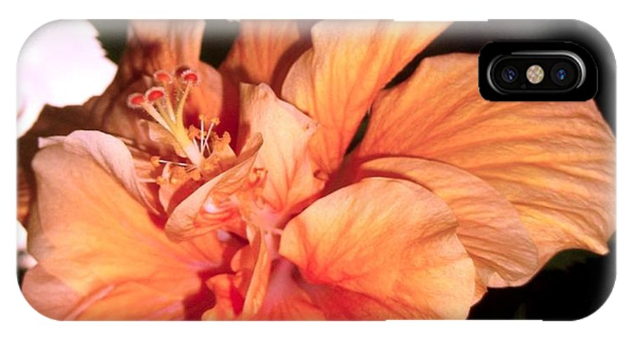 Beautiful Evening Shot Of Hibiscus Flower IPhone X Case featuring the photograph Hibiscus At Sunset by Sylvia Herrington