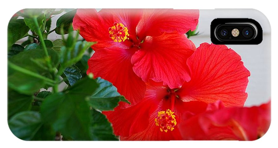 Hibiscus IPhone X Case featuring the photograph Hibiscus by Mary Griffin