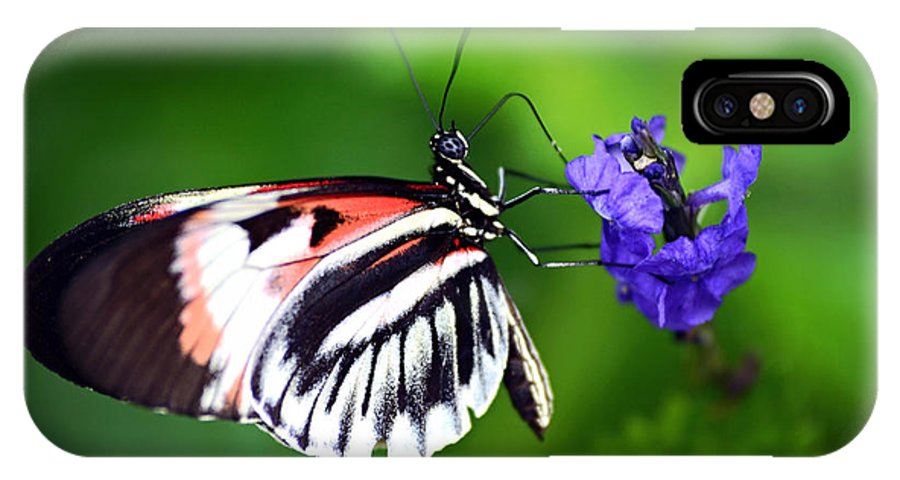 Butterfly IPhone X Case featuring the photograph Hint Of Red Butterfly by Vanessa Valdes