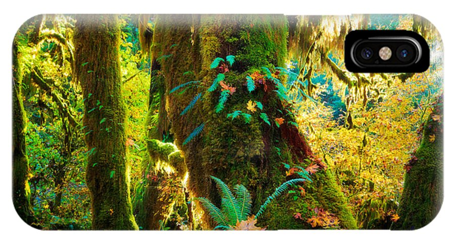 America IPhone X Case featuring the photograph Hoh Grove by Inge Johnsson