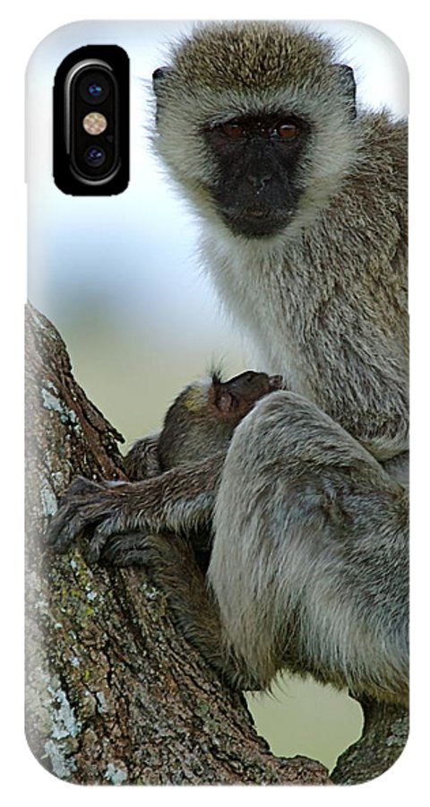 Monkey IPhone X Case featuring the photograph Holding On Tight 2 by Marc Levine