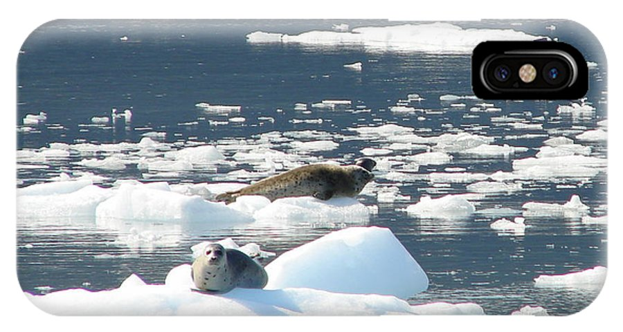 Iceberg IPhone X Case featuring the photograph Home Home On The Ice by Lew Davis