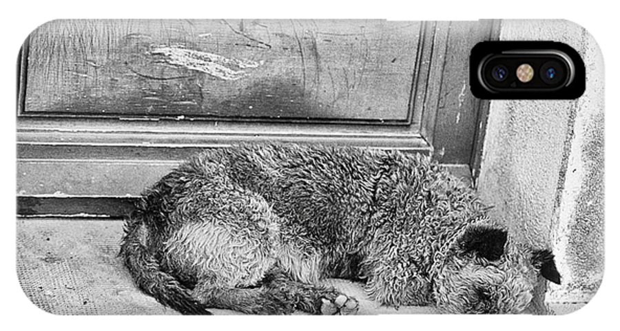 Photograph IPhone X / XS Case featuring the photograph Homeless Dog by Jan Tyler
