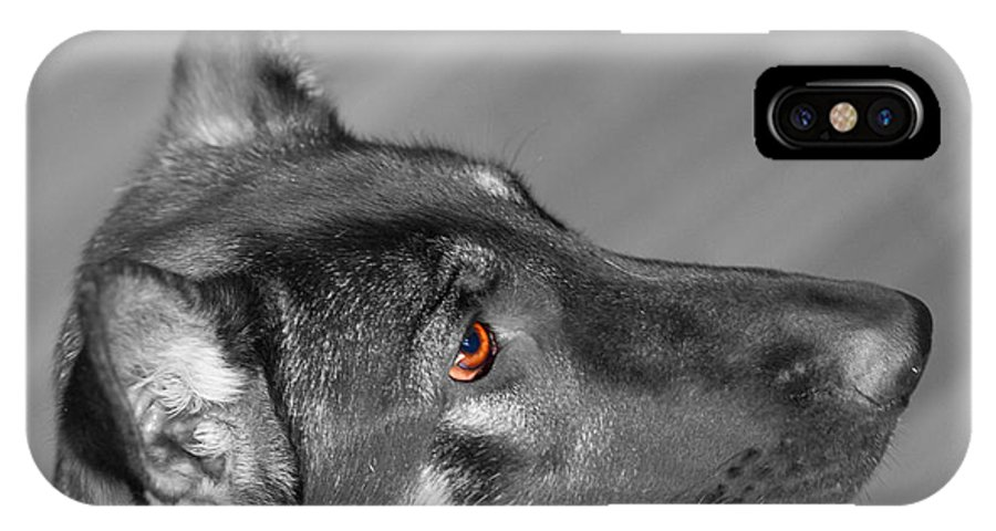 Dog IPhone X Case featuring the photograph Honey 2011 by Francine Hall