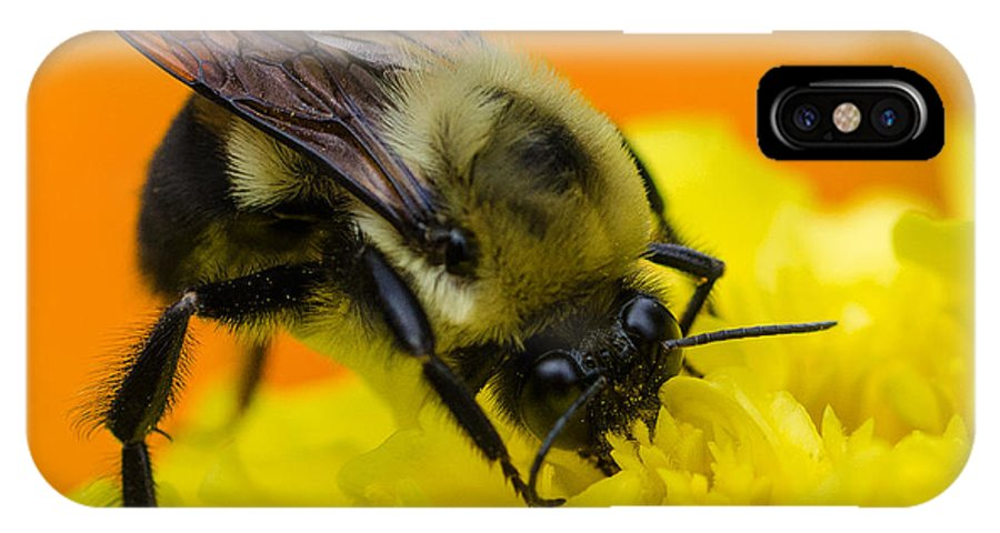 Bee IPhone X Case featuring the photograph Honey Bee by Dan Braam
