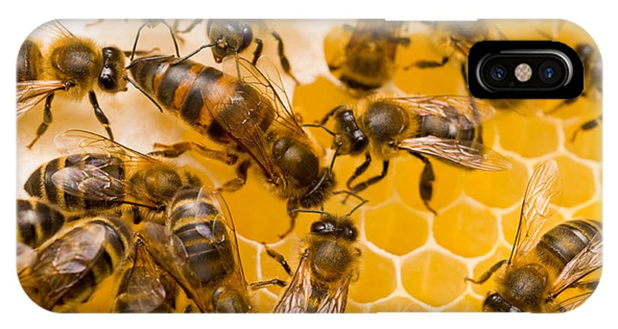 Honey Bees IPhone X / XS Case featuring the photograph Honeybee Workers And Queen by Mark Bowler