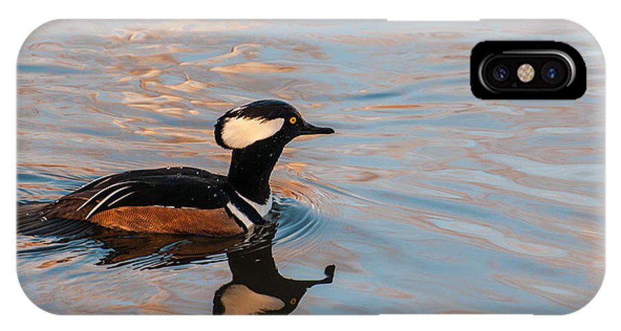Housatonic IPhone X Case featuring the photograph Hooded Merganser Drake by J H Clery