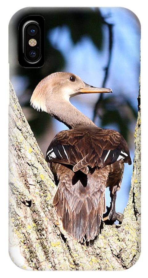 Wood Duck IPhone X Case featuring the photograph Hooded Merganser Duck by Lori Tordsen
