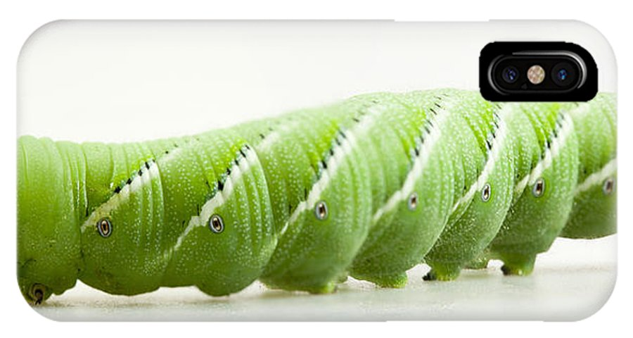 Hornworm IPhone X Case featuring the photograph Hornworm by John Crothers