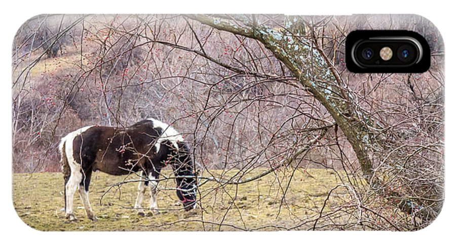 Winter IPhone X Case featuring the photograph Horse And Winter Berries by DAC Photo