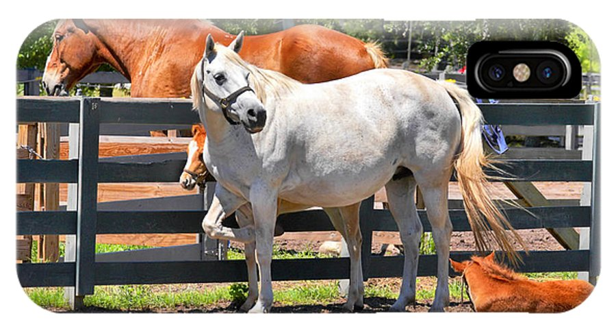 Twin Colts IPhone X Case featuring the photograph Horse Family by Mary Almond
