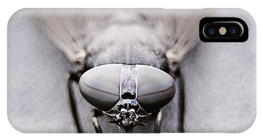 Horse Fly IPhone X Case featuring the photograph Horse Fly by Jessie Gould