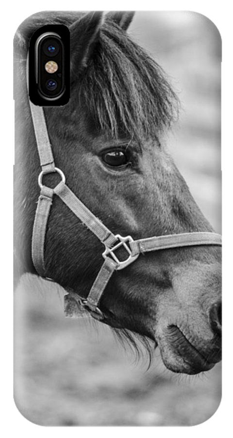 Horse IPhone X Case featuring the photograph Horse by Martina Fagan