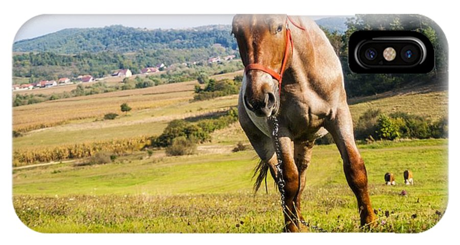Horse IPhone X Case featuring the photograph Horse by Mesaros Ronel