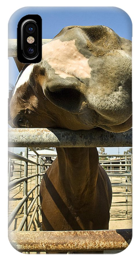 Horse IPhone X / XS Case featuring the photograph Horse Nose by Pam Elliott