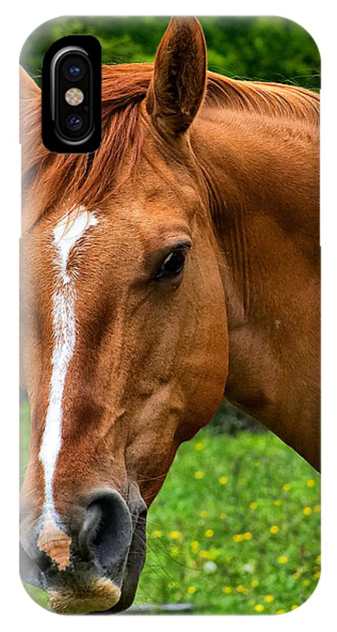 Horse Portrait IPhone X Case featuring the photograph Horse Portrait by Mary Almond