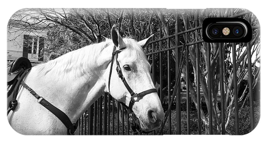 Horse Profile IPhone X Case featuring the photograph Horse Profile Mono by John Rizzuto