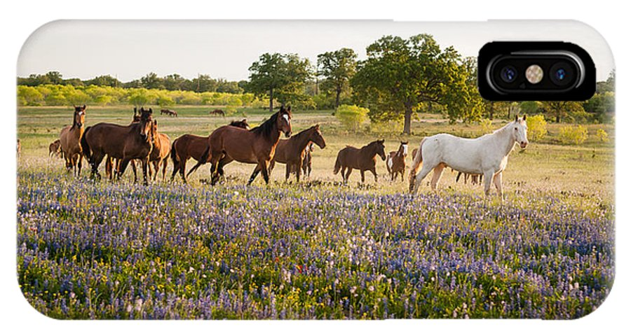 Horses IPhone X Case featuring the photograph Horses by Juanita Cannan