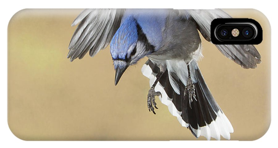 Nature IPhone X Case featuring the photograph Hovering Billy by Gerry Sibell