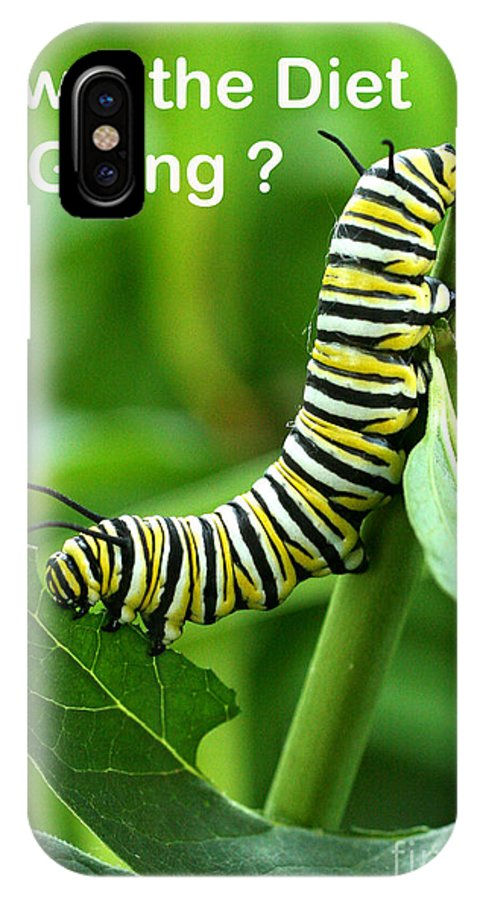 Monarch IPhone X Case featuring the photograph How The Diet Going by Steve Augustin