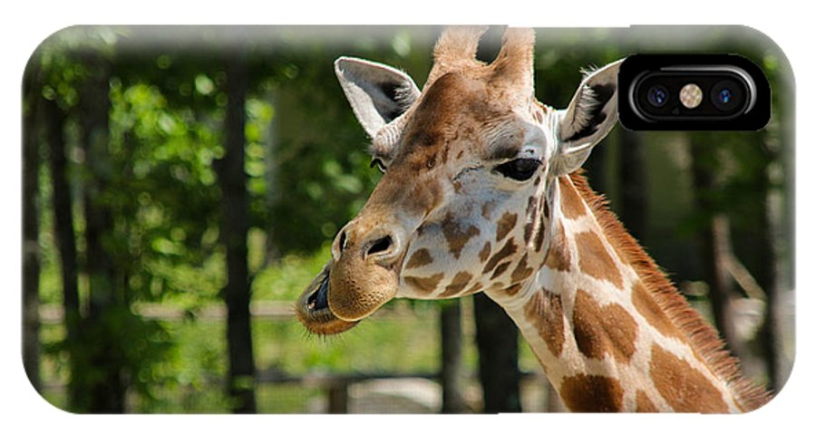 Giraffe IPhone X Case featuring the photograph Howdy by Christine Nunes