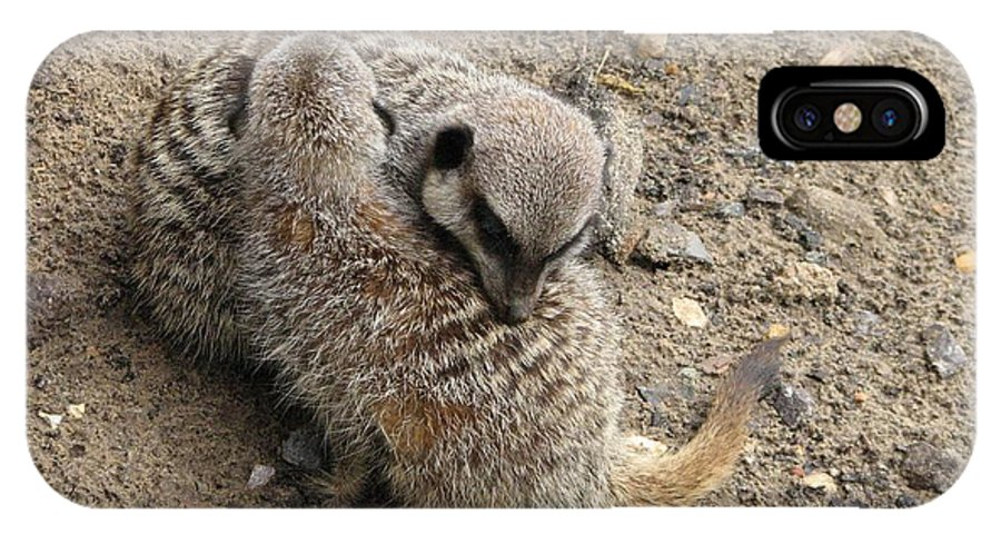 Meerkat IPhone X Case featuring the photograph Hug Time by Zori Minkova