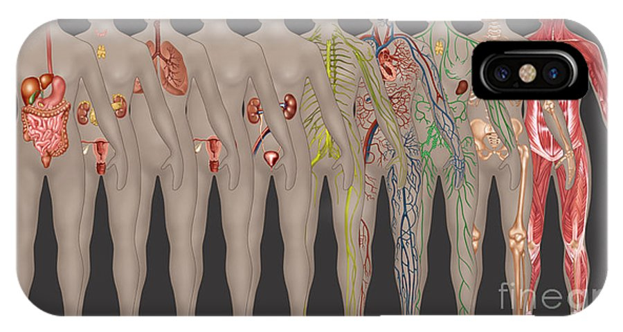 Science IPhone X / XS Case featuring the photograph Human Systems In The Female Anatomy by Gwen Shockey