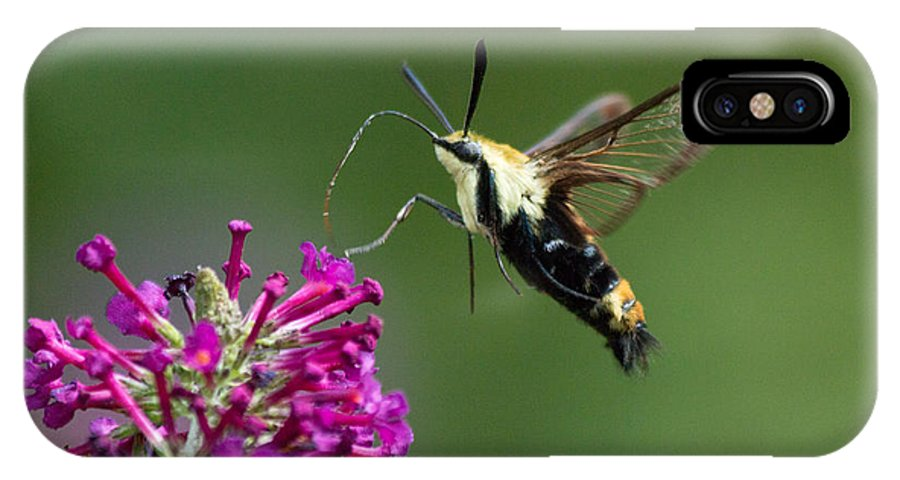 Hummingbird IPhone X Case featuring the photograph Hummingbird Moth by Gaurav Singh