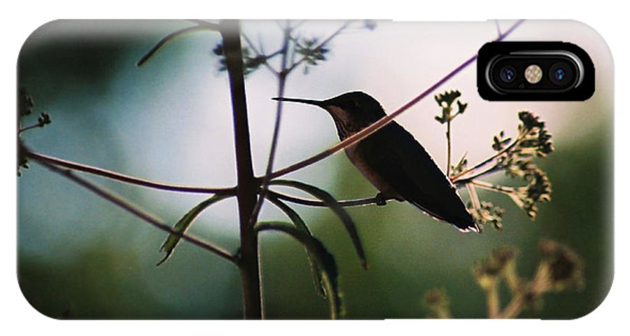 Hummingbird IPhone X Case featuring the photograph Hummingbird Silouette 2 by Cynthia Syracuse