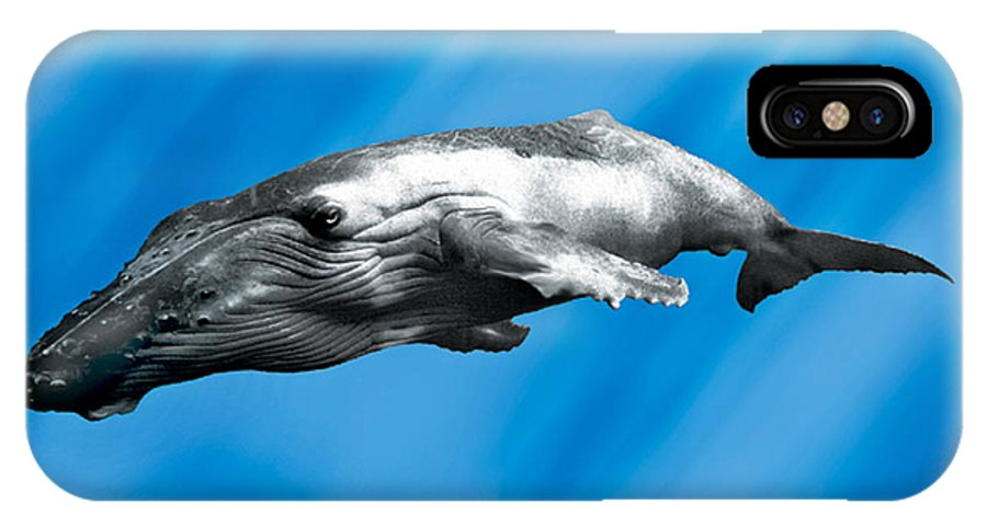 Whale IPhone X Case featuring the painting Humpback Whale by John Mabry