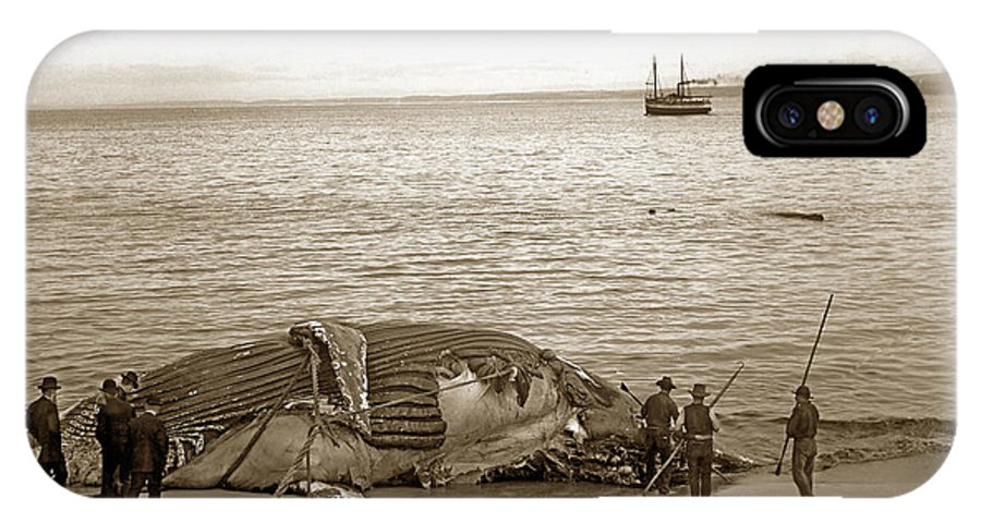 Humpback Whale IPhone X Case featuring the photograph Humpback Whale On A Monterey Beach California Circa 1896. by California Views Archives Mr Pat Hathaway Archives