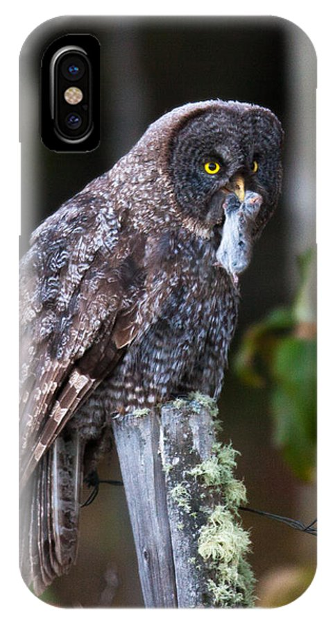 Great Grey Owl IPhone X Case featuring the photograph Hunted by Kevin Dietrich