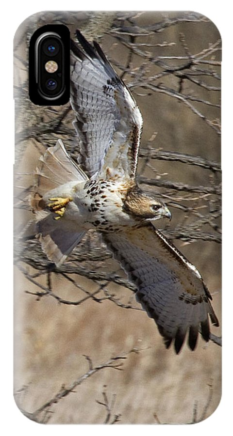 Red-tailed Hawk IPhone X Case featuring the photograph Hunter by Eric Mace