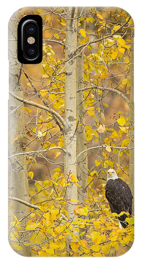 Adult IPhone X Case featuring the photograph Hunting From An Aspen by Tim Grams