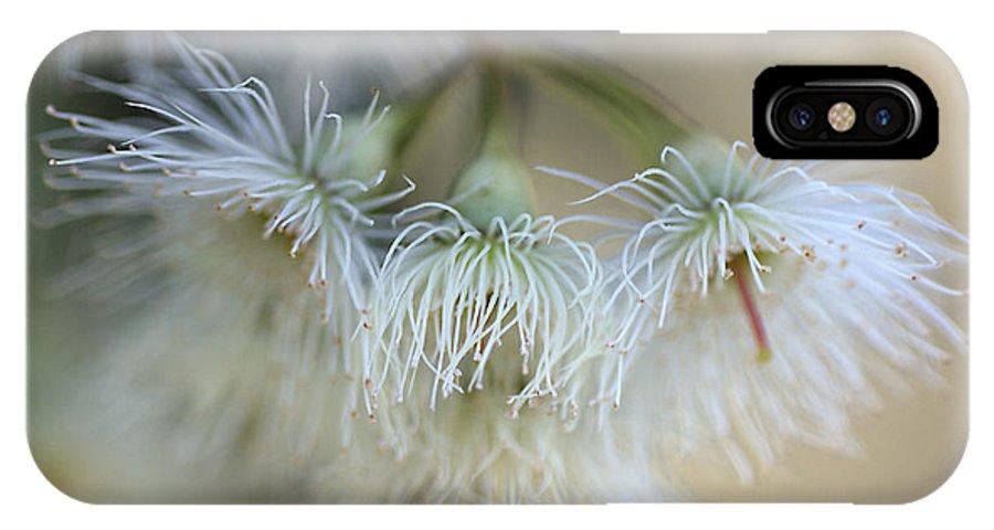 Eucalyptus Flower IPhone X Case featuring the photograph Hush by Joy Watson