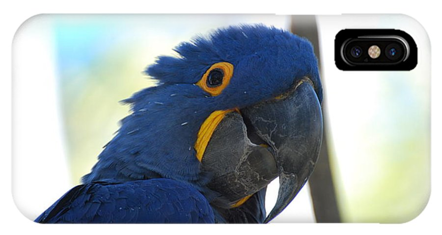Parrot IPhone X Case featuring the photograph Hyacinth Macaw by Gretchen Treves