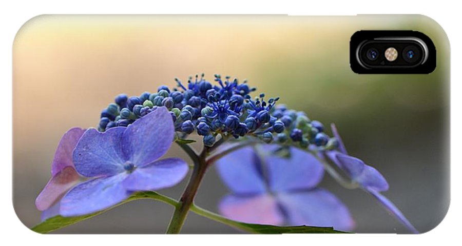 Flora IPhone X Case featuring the photograph Hydrangea Umbrella by Larry Bishop