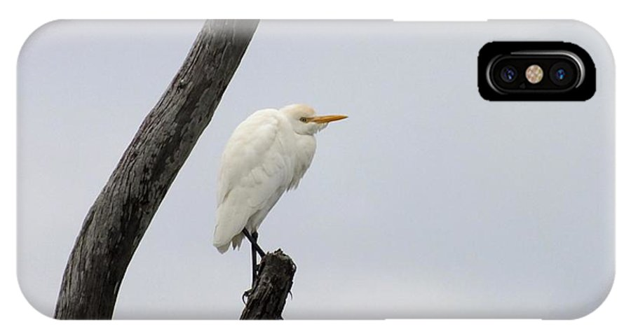Nature IPhone X Case featuring the photograph I Am Watching You by Peggy King