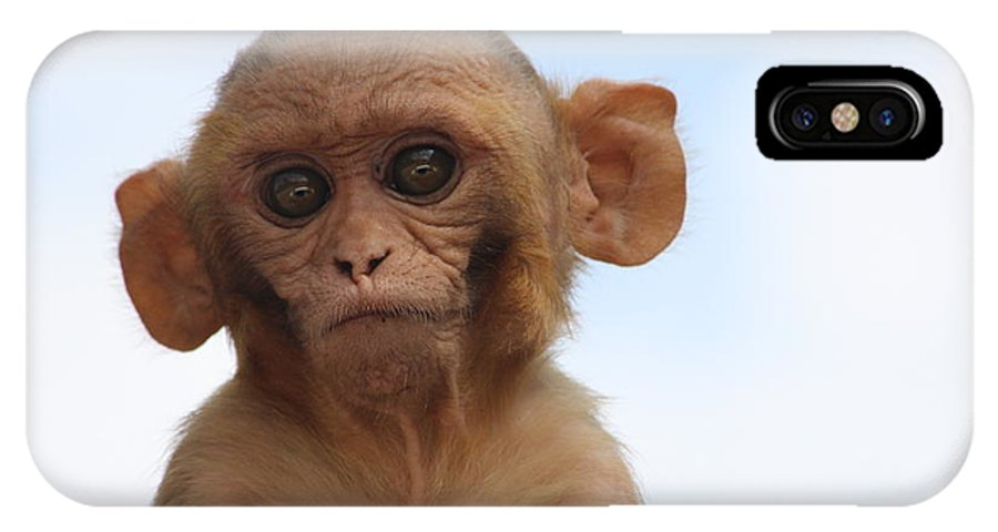 Monkeys IPhone X Case featuring the photograph I Can Hear You by Four Hands Art