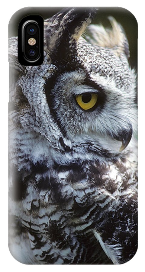 A Sleepy And Hungry Barn Owl Is Seen In Indiana. IPhone X Case featuring the photograph I Do Not Give A Hoot by Carl Purcell