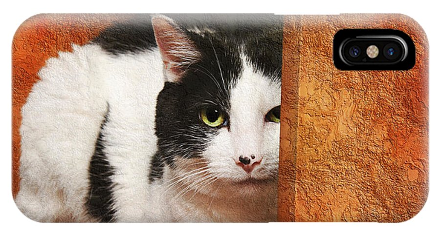 Cat IPhone X / XS Case featuring the photograph I Have My Eye On You by Andee Design