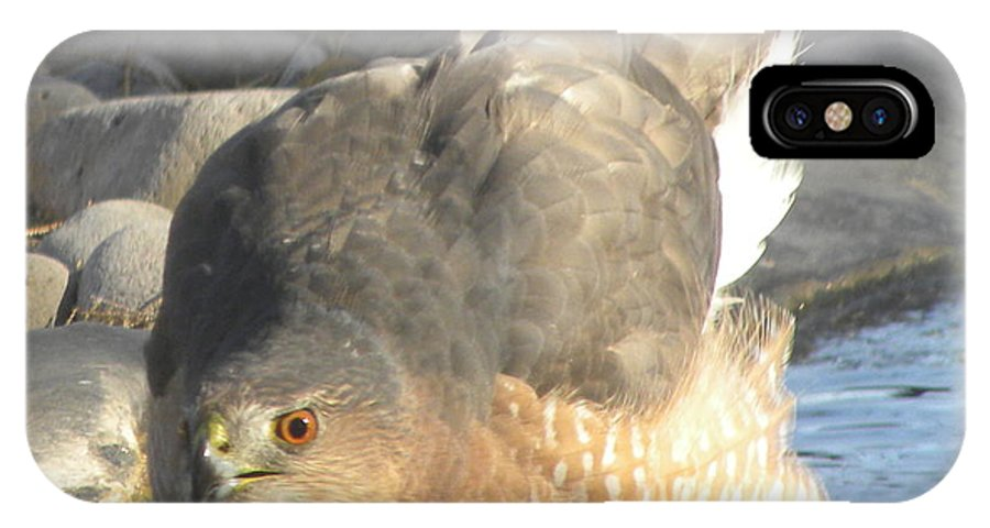 Coopers Hawk Standing In Small Stream IPhone X Case featuring the photograph I Spy by John Wilson